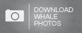 Whales - photo download UK-01